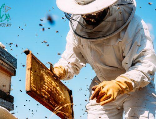 جمعية بداية – تعرف على الاستعدادات اللازمة لحماية النحل من برودة الشتاء