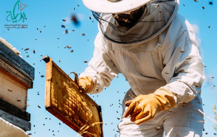 صوره تحتوى على عدد من النحل