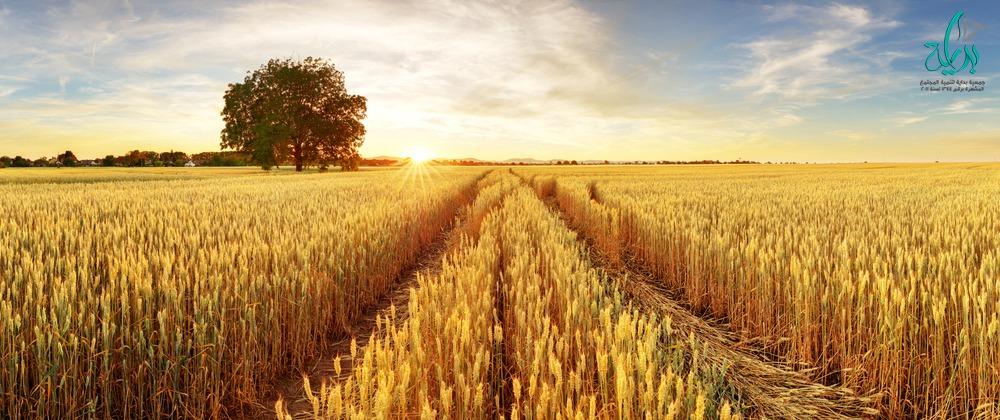 جمعية بداية لتنمية المجتمع - القمح