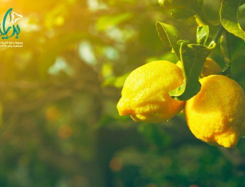 جمعية بداية – خطوات مختلفة لحفظ الليمون طازجا بخطوات سهلة