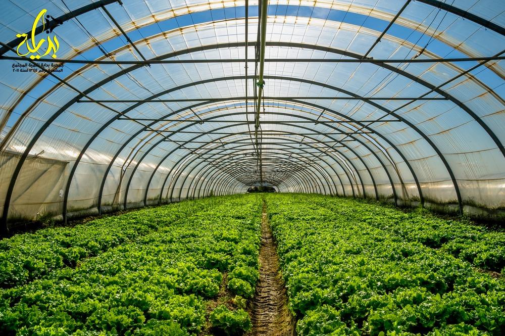 وزاره الزراعه تمنح تسهيلات لاستخراج تراخيص الصوب الزراعيه