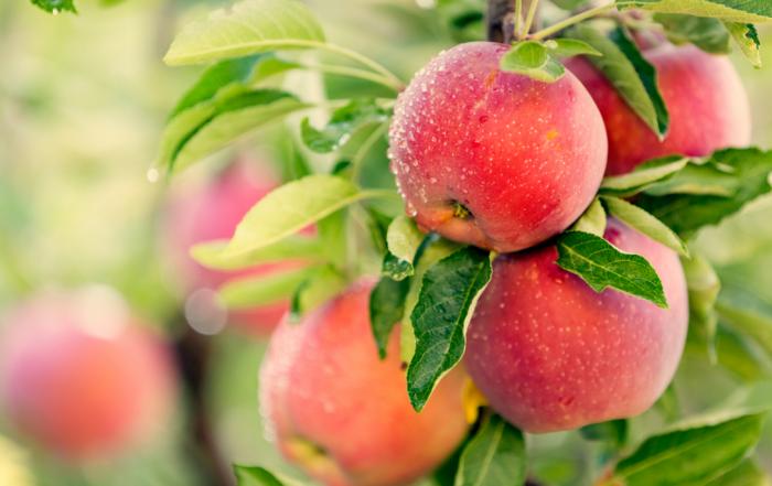 طريقة تخزين التفاح في الفريزر .. مدة الصلاحية وتأثيره