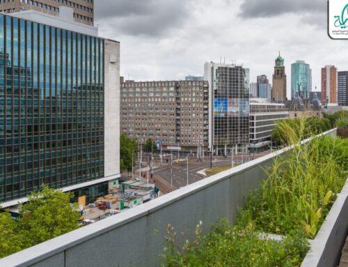 جمعية بداية -خطوات نجاح مشروع زراعة أسطح المنازل – ملف كامل